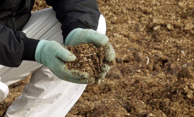 как использовать голубиный помет в качестве удобрения