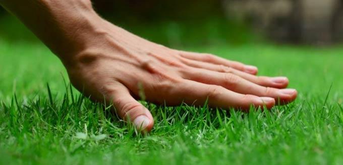 подстричь газон