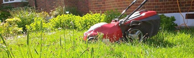 нужно ли стричь газон перед зимой
