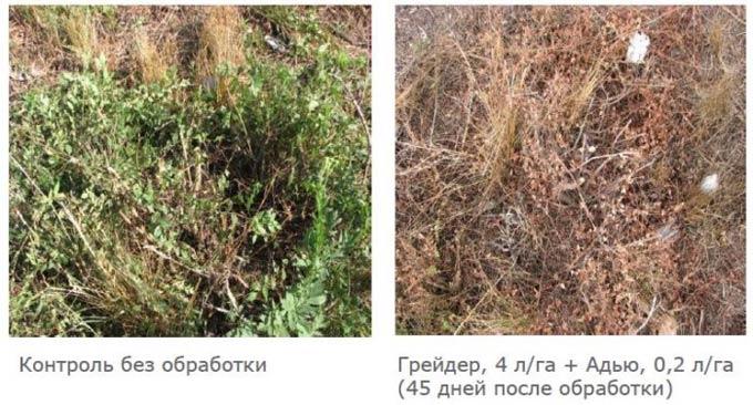 результат обработки гербицидом Грейдер