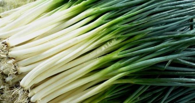 выращивание лука на перо гидропоникой