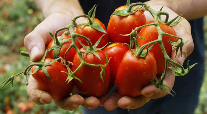 Монокалийфосфат для помидор