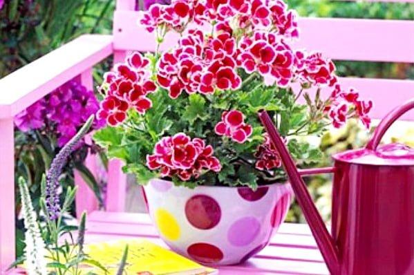 подкормка гераней для обильного цветения