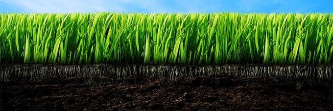 плодородная земля