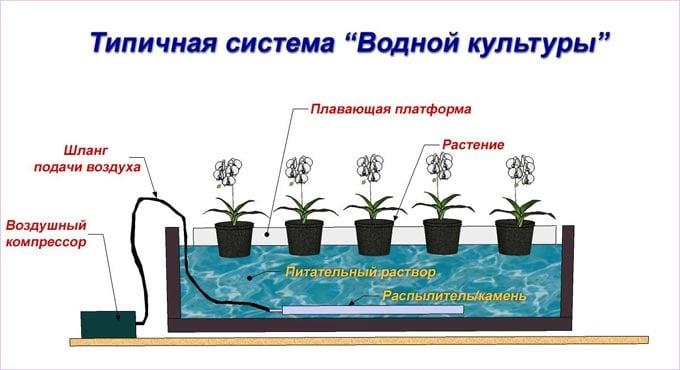 устройство водной культуры
