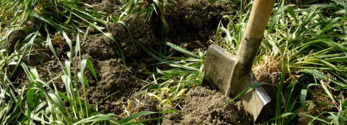 заделка овса в почву