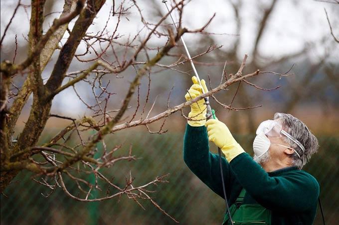 фунгицид для плодовых деревьев