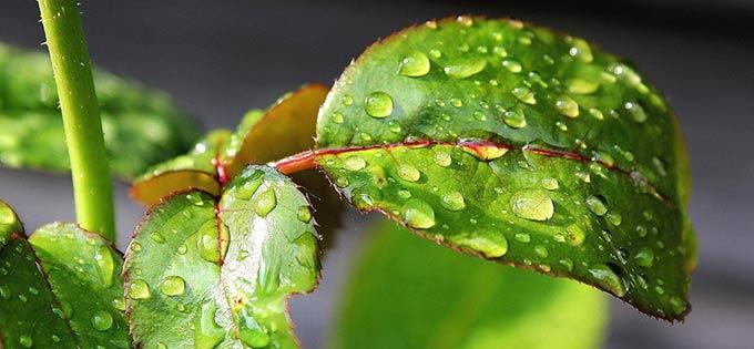 прилипатель для пестицидов