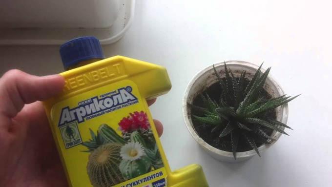агрикола для кактусов