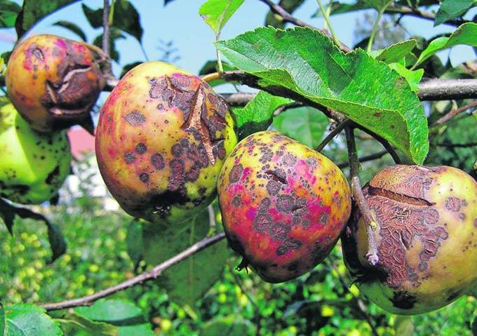 защита яблони от вредителей