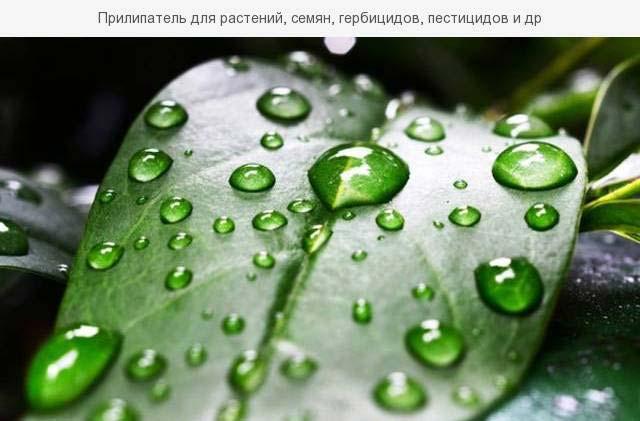 прилипатели для растений