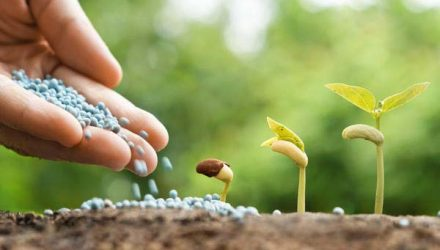 Использование разных видов азотных удобрений