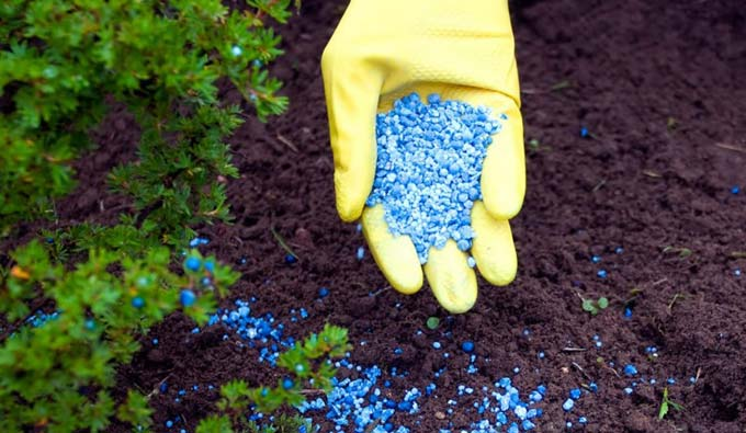 чем заменить фосфорное удобрение