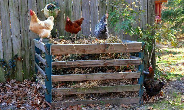 куриный навоз для огорода