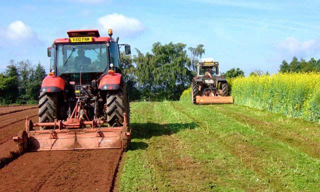 когда сеять горчицу для улучшения почвы