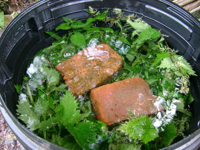 настой из крапивы для подкормки растений