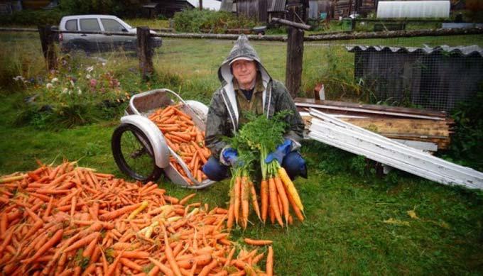 подготовка почвы под морковь