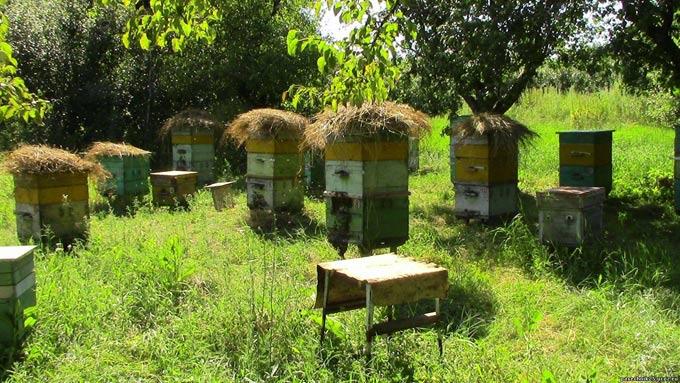 пасека и инсектициды