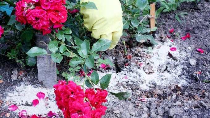 фосфорно-калийные удобрения для цветов