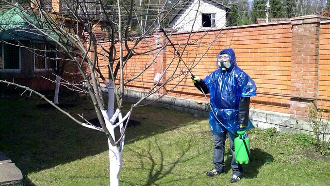обработка деревьев осенью от вредителей