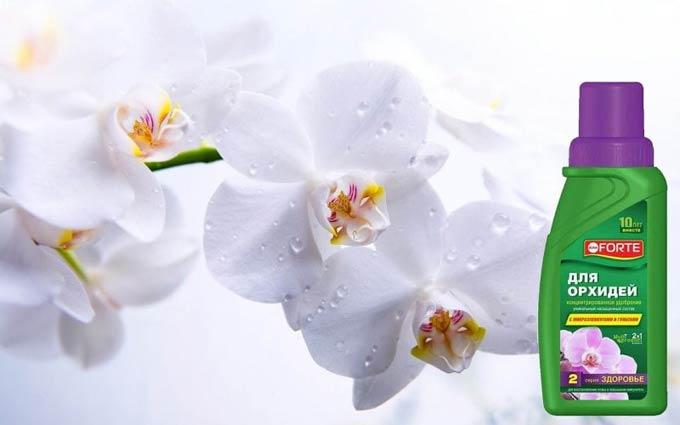 подкормка для орхидей