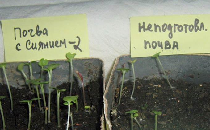 Почва с Сиянием