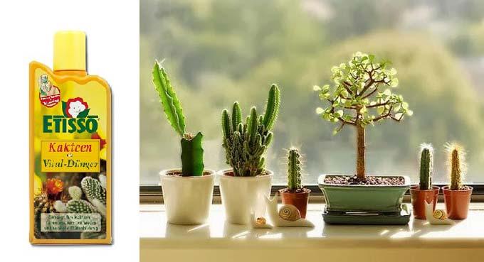 этиссо для кактусов