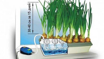 Польза и вред гидропоники для организма