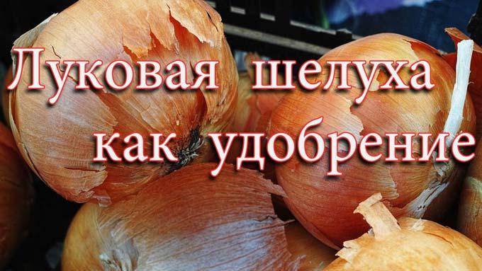 удобрение из луковой шелухи