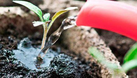 Нашатырный спирт как удобрение для растений