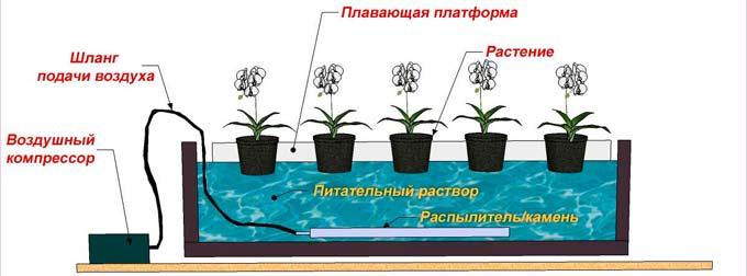 метод гидропоники