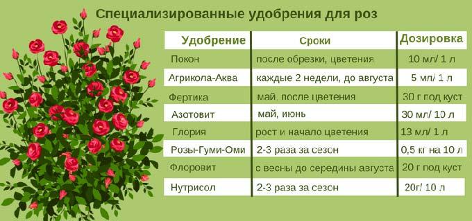 нормы удобрений для роз