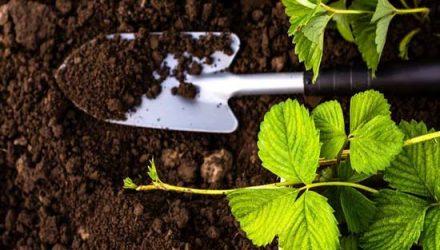 Основные виды органических удобрений