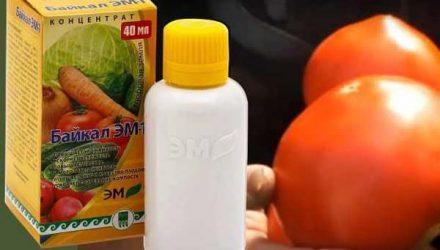 Применение препарата Байкал-ЭМ в огороде