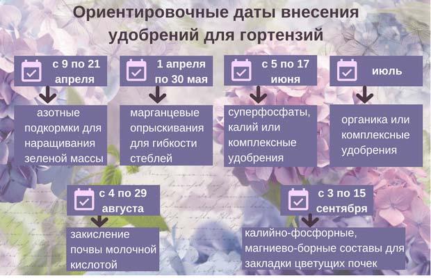 график внесения удобрений для гортензий