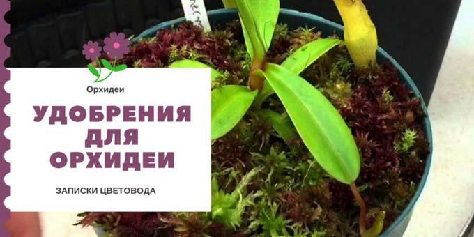 удобрения для орхидеи