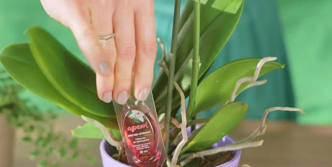 современное удобрение для орхидей