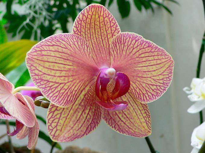 удобрения для цветения орхидей