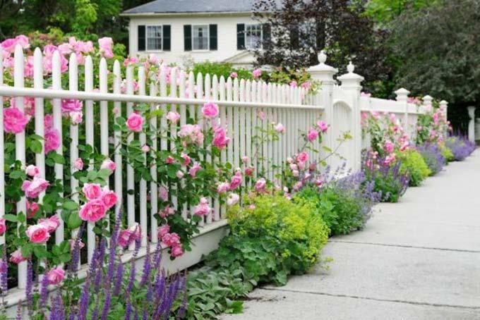 какие декоративные кустарники посадить вдоль забора