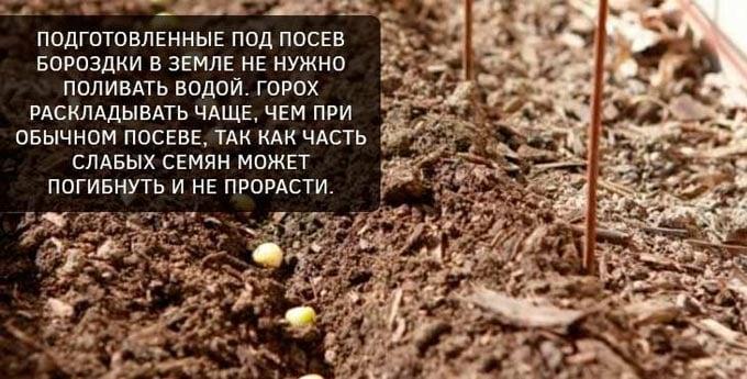 подготовка почвы под горох