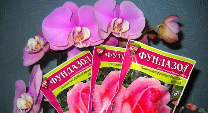 фундазол для орхидей