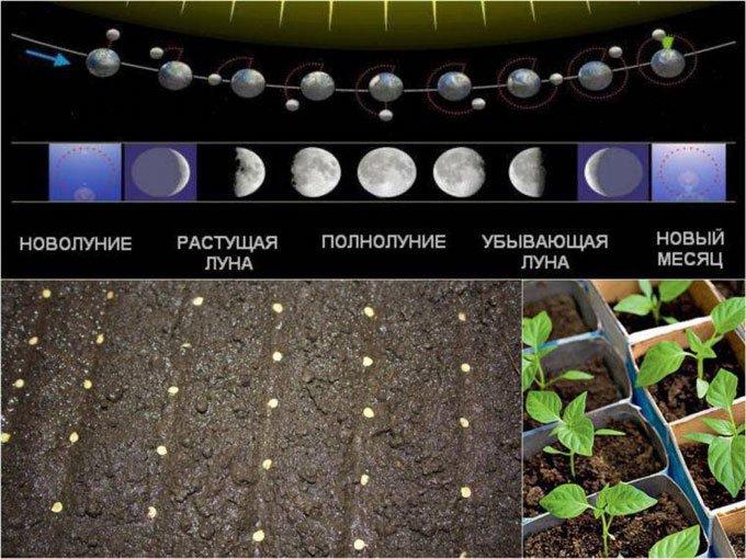 лунный календарь посева