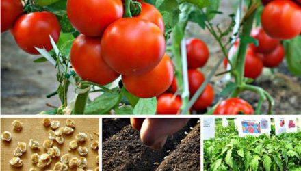 Правильно выбираем благоприятные дни для посева