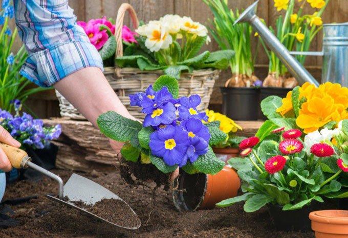 благоприятные дни для посадки цветов