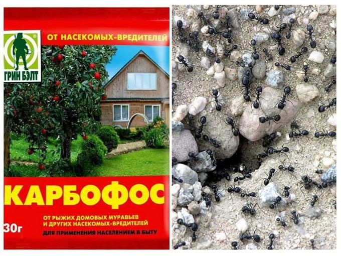 карбофос от муравьев