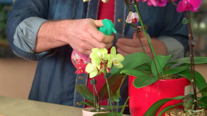 подкормка для орхидей в домашних условиях