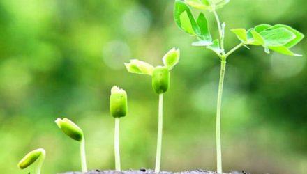 Активация роста растений с помощью фитогормонов